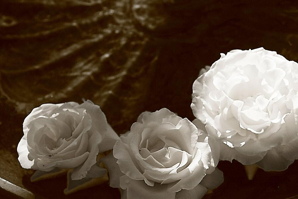 Monochrome Roses by Stephen Denham