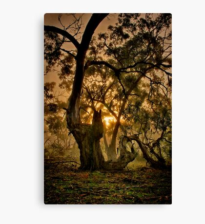 """Ghostly Gums"" Canvas Print"