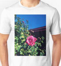 fuchsia rose, blue sky 09/15/17 T-Shirt