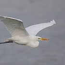Great White Egret by Alan Forder
