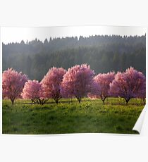 Blossoms in the Fields..*Spring is Coming* Poster