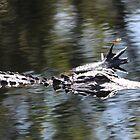 Alligator Manicure by Cynthia48