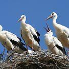 stork family on the nest by Alexandr Zadiraka