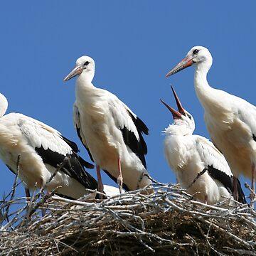 stork family on the nest by zadiraka