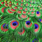 Peacock Feathers by Walter Colvin
