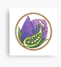 SWEET PEA CROSS SECTION Canvas Print