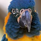 Up Close and Personal by DebiDalio