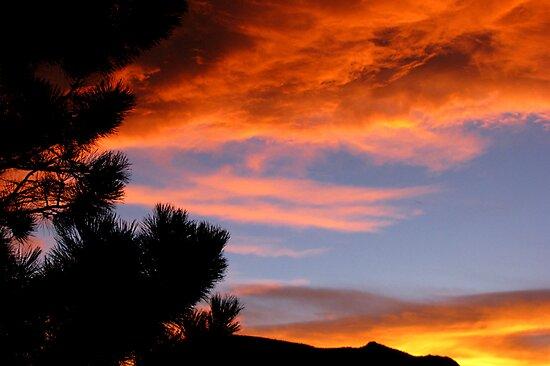 Goodnight Sky by Jan Landers