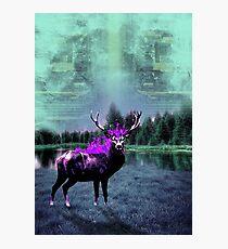Deer 2 Photographic Print