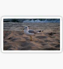 Seagull on the Beach Sticker