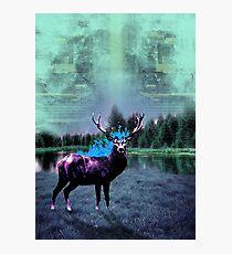 Deer 3 Photographic Print
