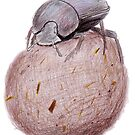 Dung Beetle by Linda Ursin