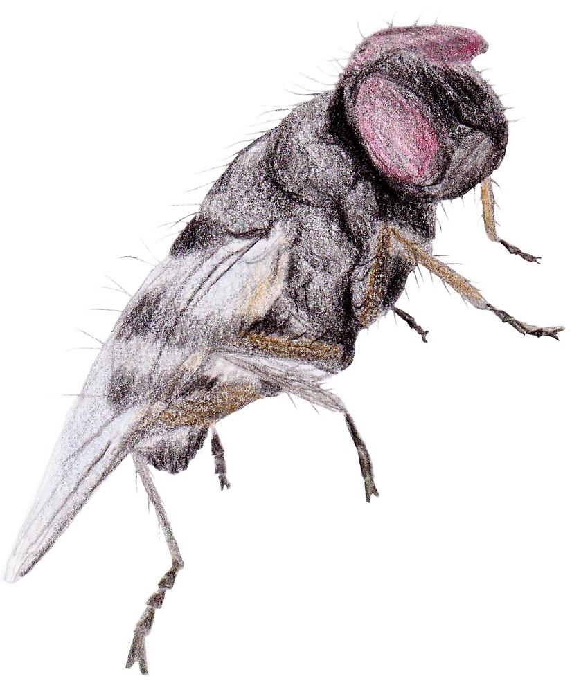 Housefly by Linda Ursin