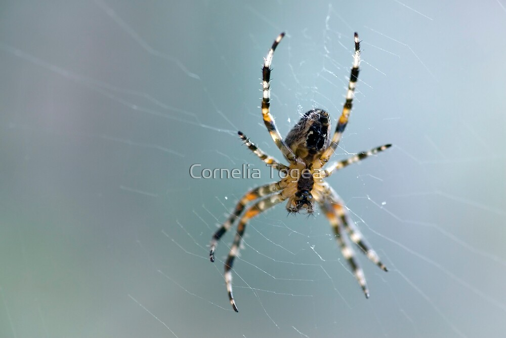 just hanging by Cornelia Togea