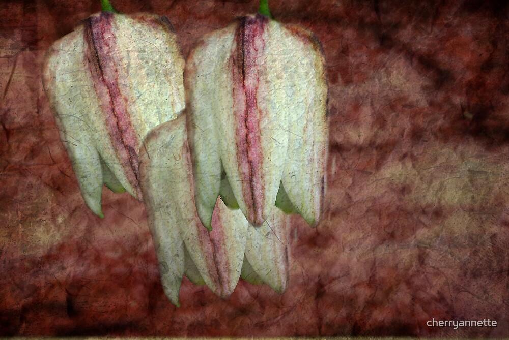Fritilaria by cherryannette