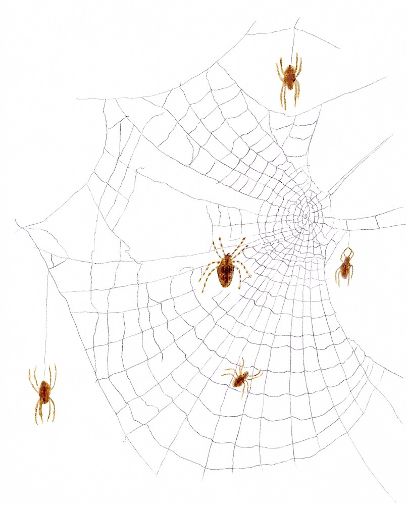 Spiders on the Web by Linda Ursin