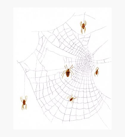 Spiders on the Web Photographic Print