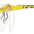 Yellow Dragonfly by Linda Ursin