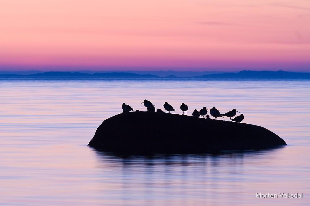 Oystercatchers by Morten Vaksdal