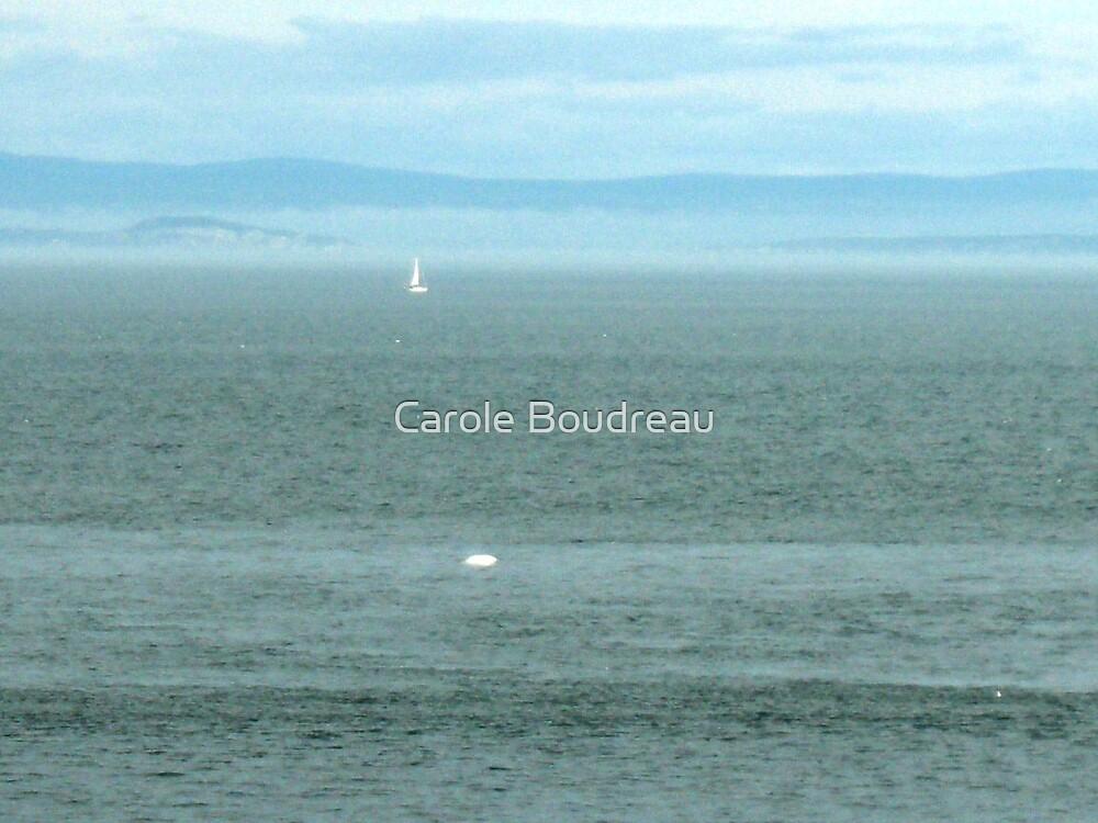 Beluga's at sea! by Carole Boudreau