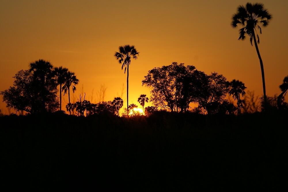 Sunset, Okavango Delta by Thunderchunky