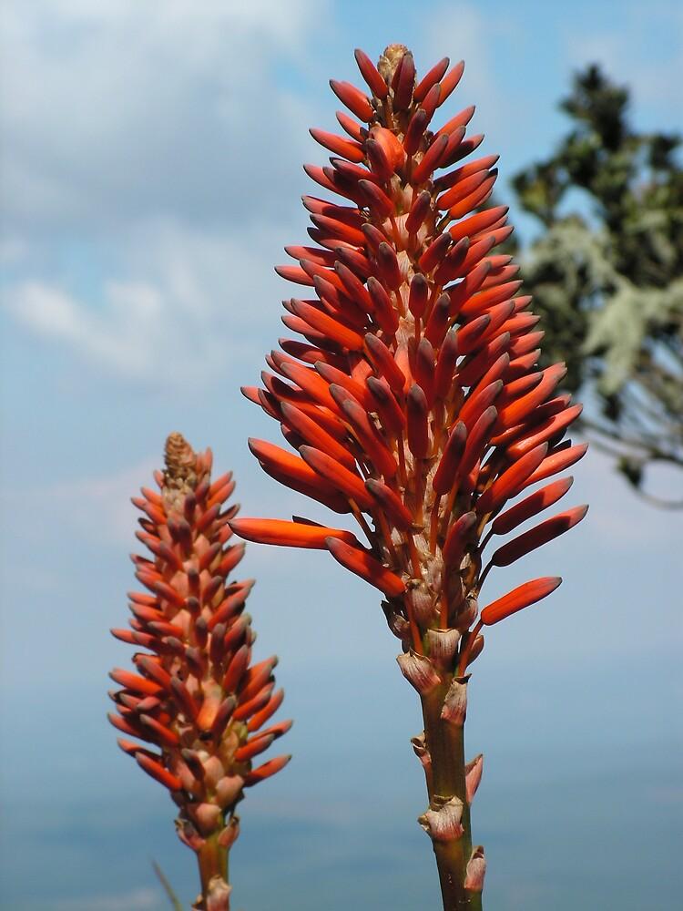 Flower, God's Window, South Africa by Thunderchunky
