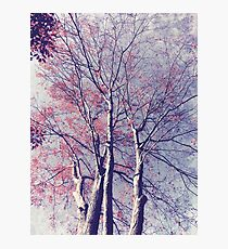The Trees - The Enchanted Forest in Spring Photographic Print