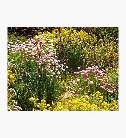 Australian wildflowers, Kings Park, Perth, Western Australia. Photographic Print