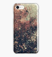 The Trees - The Enchanted Forest in Fall iPhone Case/Skin