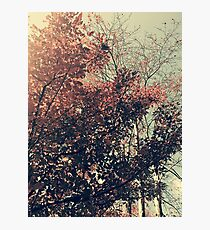 The Trees - The Enchanted Forest in Fall Photographic Print