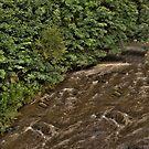 Overgrown Waterway by Daniel Knights