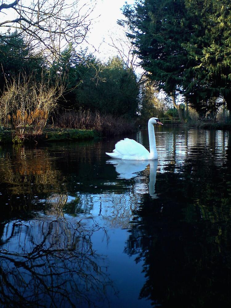 swan  by ramorisk