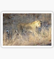 South African Leopard Sticker