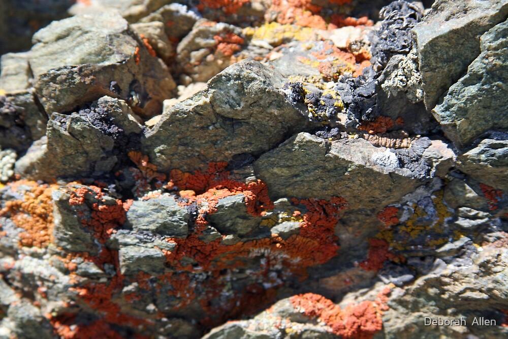 Lichen Colored Rocks by Deborah  Allen