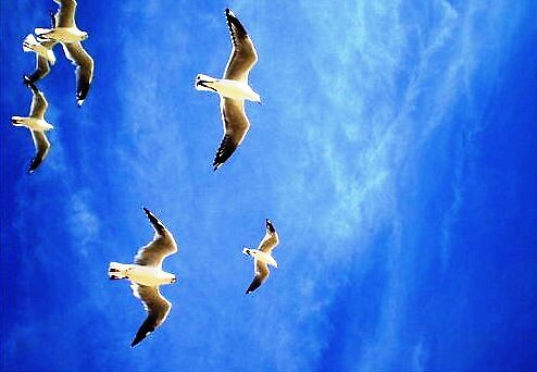 Seagulls by HEELS
