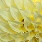 Where troubles melt like lemon drops by Celeste Mookherjee
