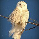 Snowy Owls & ANIMALS In Snow