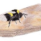 Bumblebee on a piece of bark by Linda Ursin