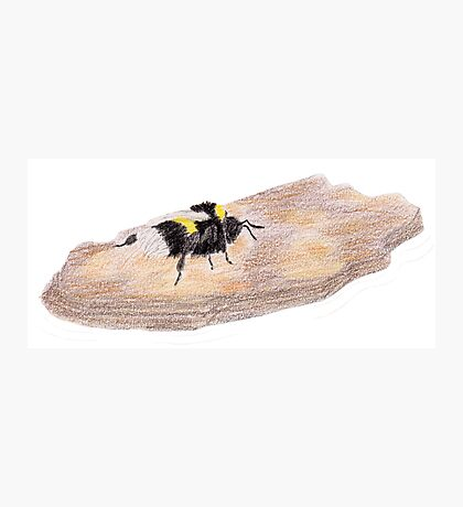 Bumblebee on a piece of bark Photographic Print