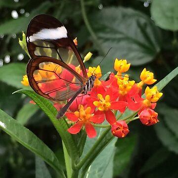 Butterfly on Flower by mattpimm