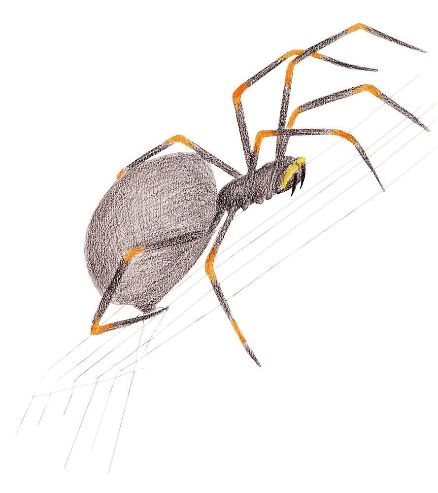 Spider by Linda Ursin