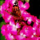 Butterflies go by Nikki Collier
