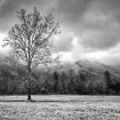 Cades Cove Snow II by Douglas  Stucky