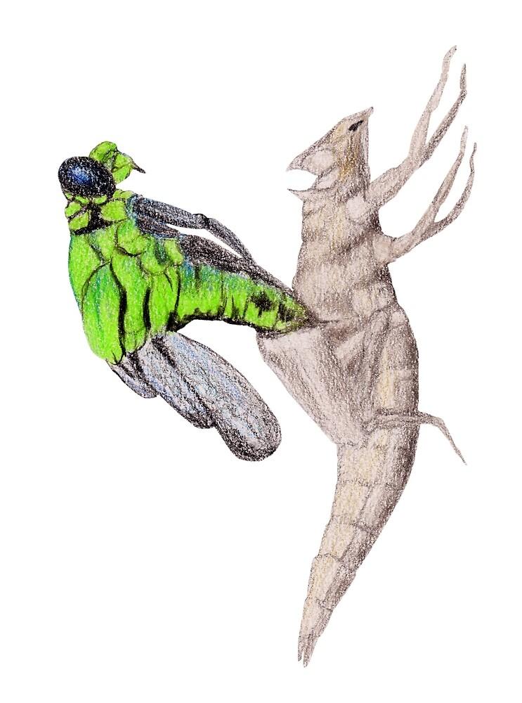 Dragonfly emerging by Linda Ursin