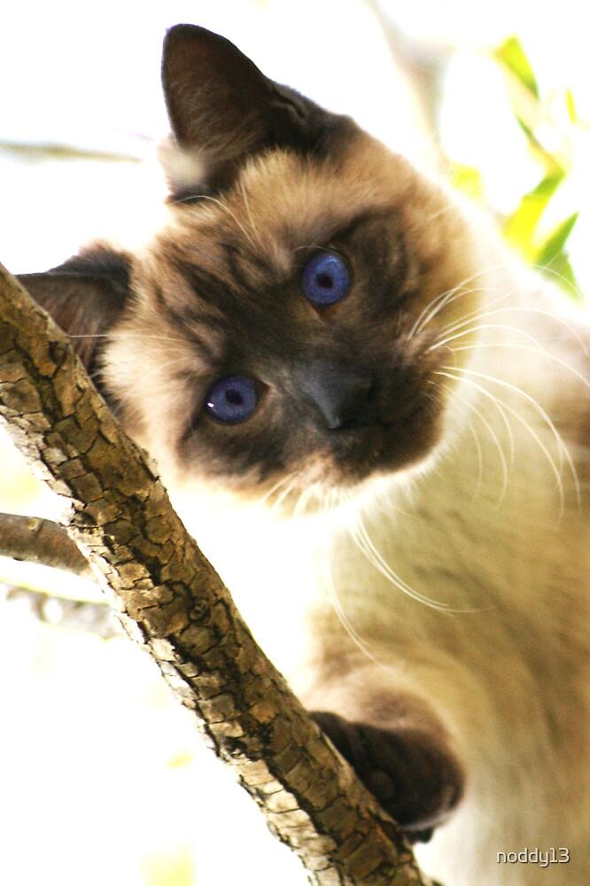 blue eyed beauty by noddy13