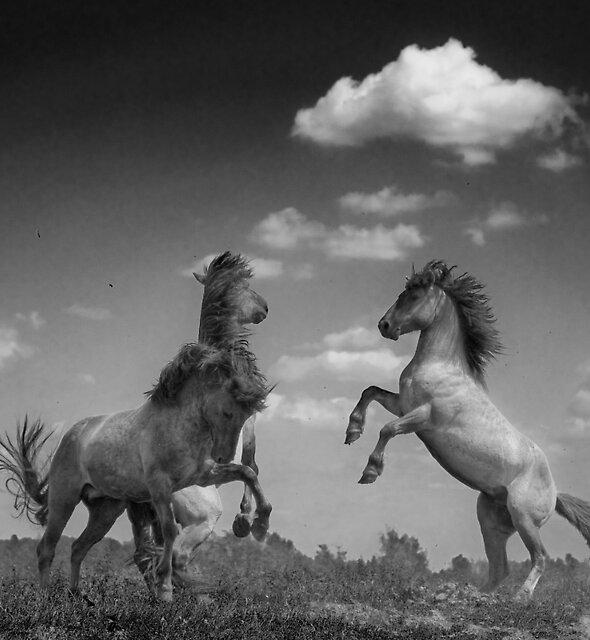 Wild Horses (2 of 2) by Henri Ton