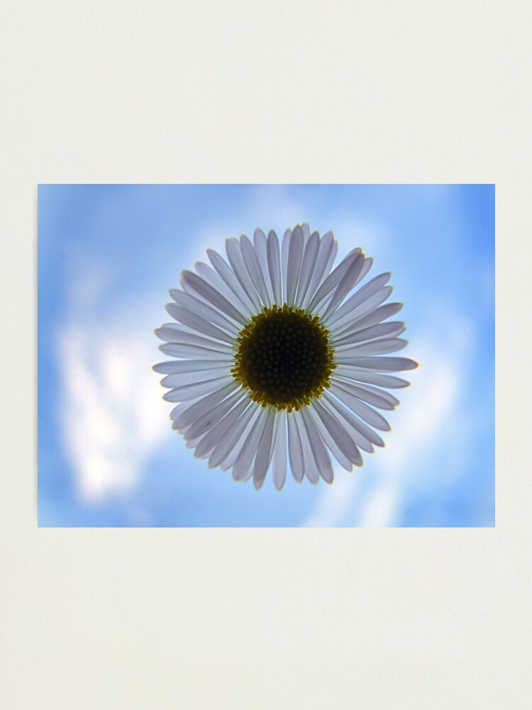 Alternate view of Daisy in the Sky Photographic Print
