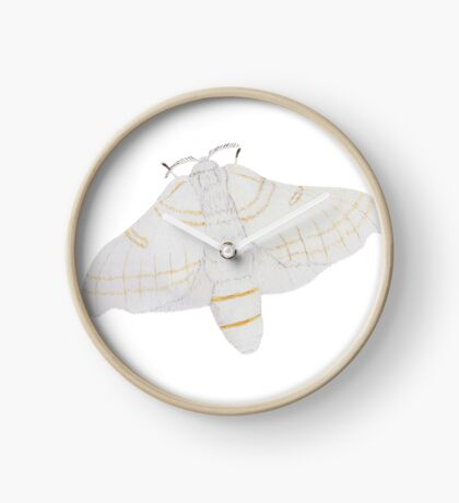 Silk moth from above Clock