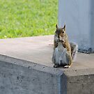 Squirrel at the Kennedy Space Center by Hermien Pellissier