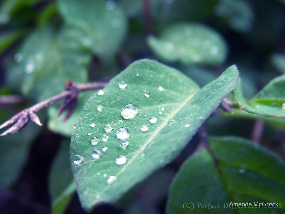 Rain Catcher by Amanda McGreck